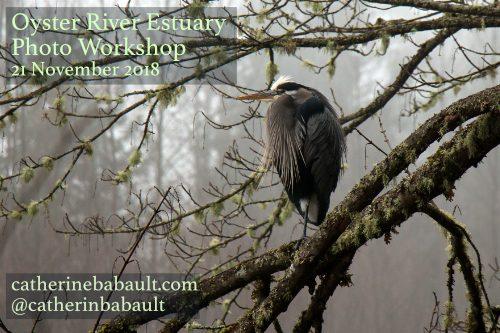 Oyster River Estuary Photo Workshop