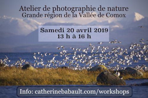 Atelier de photo de nature dans la Vallée de Comox