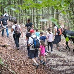 Gruppo di bambini e adulti in escursione con gli asini