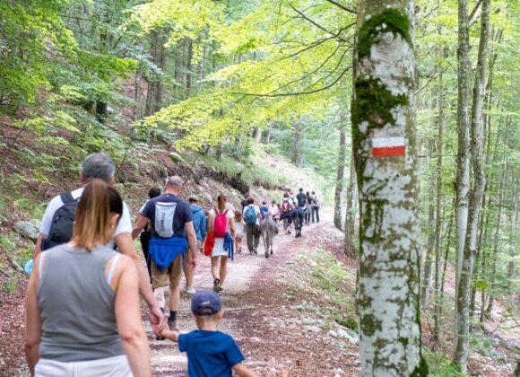 Un gruppo di escursionisti in cammino con gli asinelli