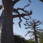 Création avec Branca au Sénégal