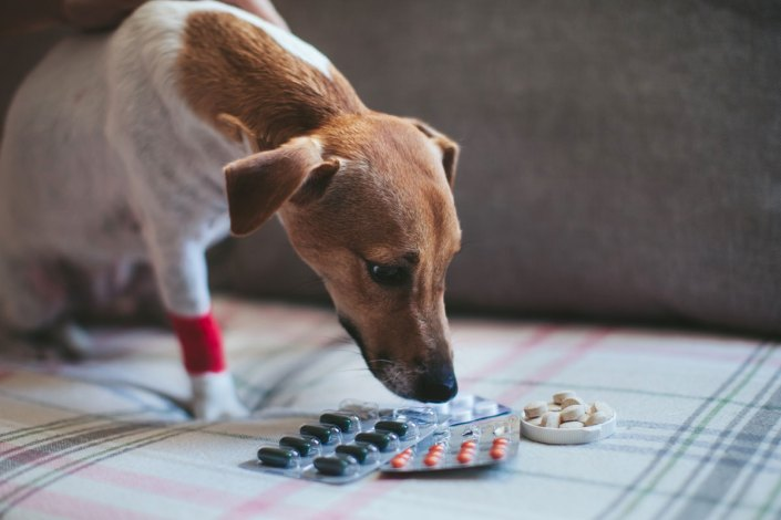 administer capsules and tablets to cats or dogs