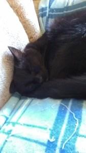 Toby sleeping 01