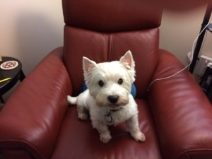 "my friend Woody Brinati, posing as ""the Westie boy"""