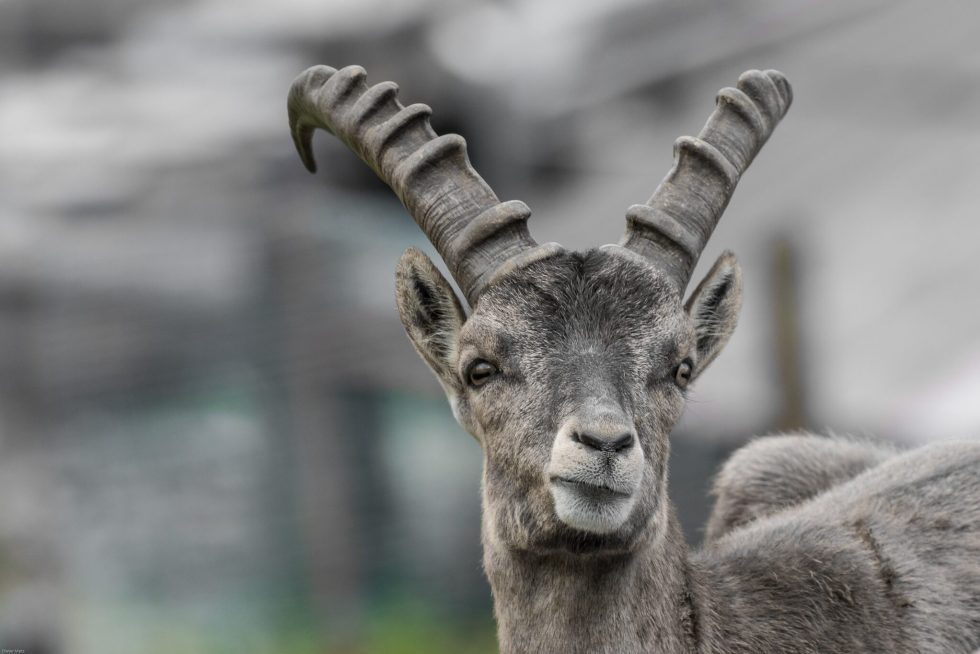 Ibex ram image for Aries compatibility