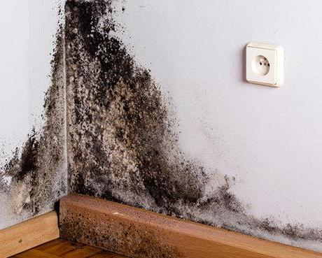 Keep Mold From DESTROYING Your Home!