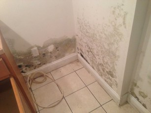damp basement also promotes mold growth