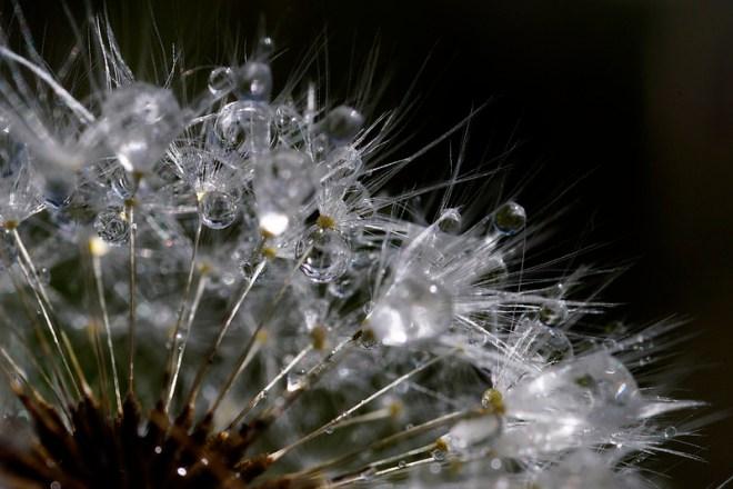 @Stef-Flickr CC- Water net