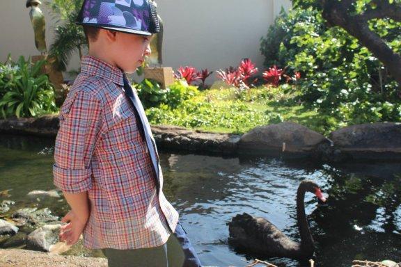 Hyatt Maui Black Swan