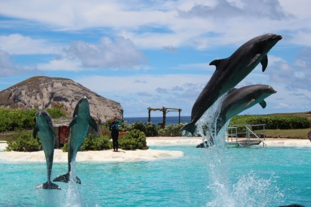 Oahu Sea Life Park With Kids Review