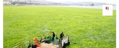 Agricultura, medio ambiente y sostenibilidad: Empleo de fertilizantes inorgánicos