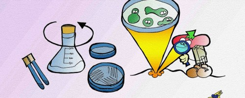 Los microorganismos del suelo y la relación C/N
