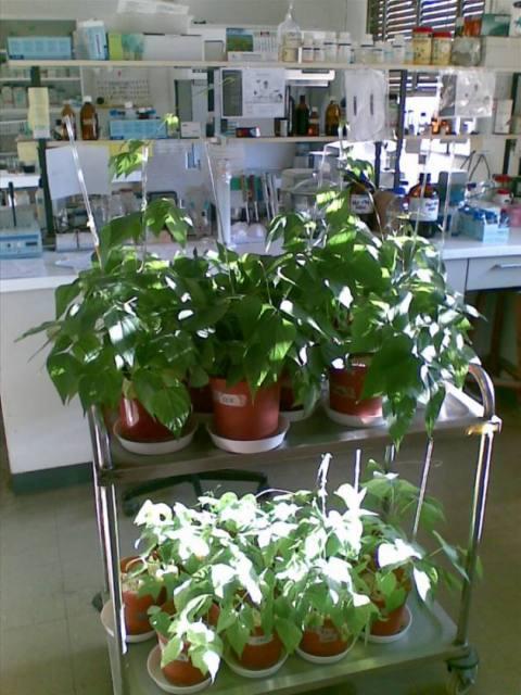 Investigación en Fijación Biológica de Nitrógeno