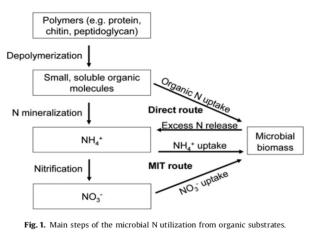 Mineralización del nitrógeno orgánico en un suelo agrícola