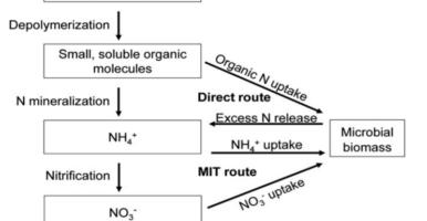 Enzimas y factores decisivos de la asimilación del nitrógeno por los microorganismos del suelo