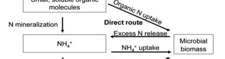 Microorganismos que transforman el nitrógeno en un compost de estiércol