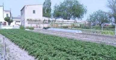 Muestra compuesta de un suelo agrícola
