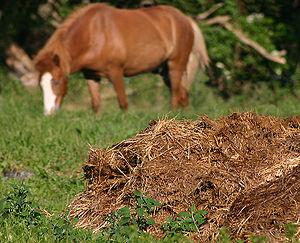 Estiércol de caballo
