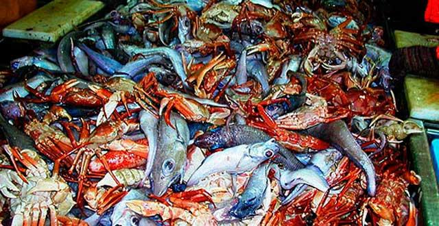Residuos pesqueros