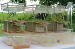 El compost reduce la erosión y lixiviación de nutrientes