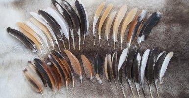 Materiales para compostar: Las plumas