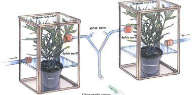 Demuestran que los microorganismos del suelo ayudan a la planta a defenderse de insectos herbívoros