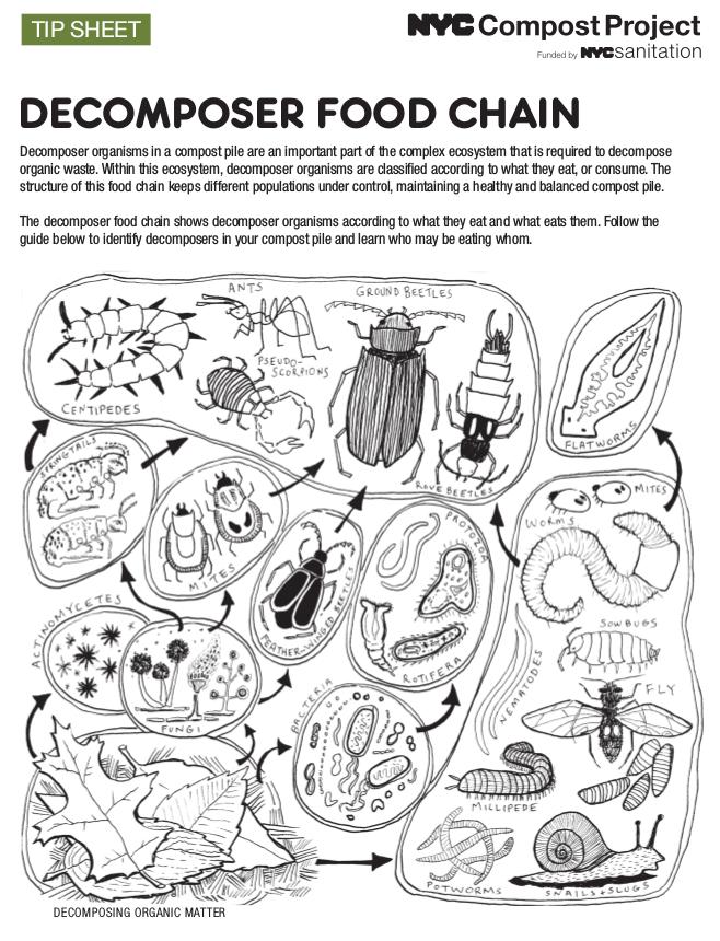Red trófica del compost