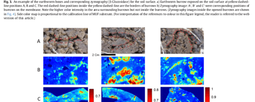 Las lombrices de tierra incrementan la actividad microbiana del suelo