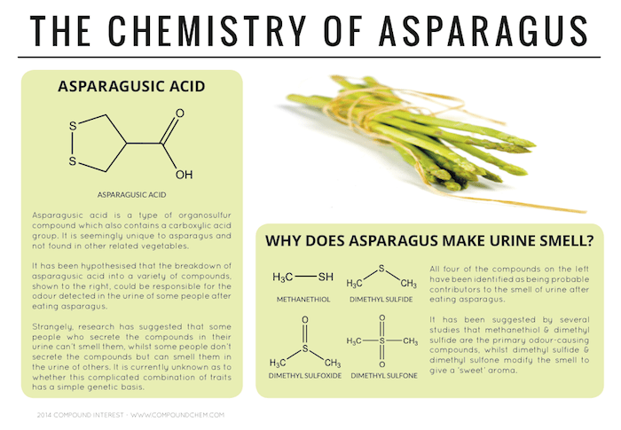 Why Does Asparagus Make Urine Smell? – The Chemistry of