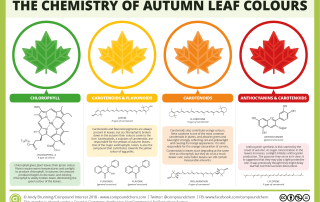 Chemistry of Autumn Leaves 2018