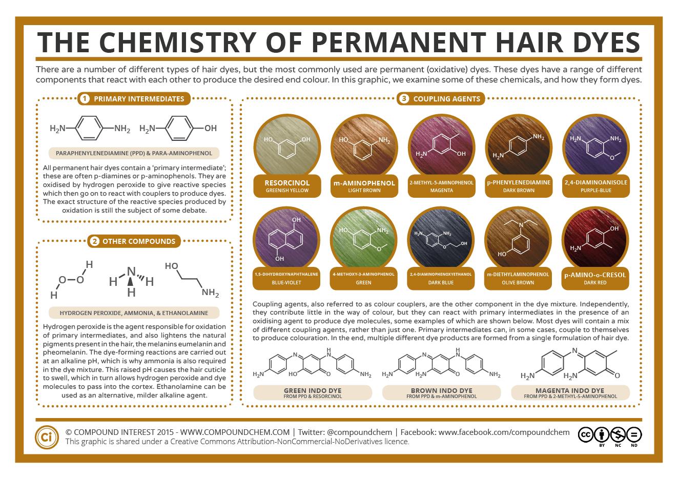 Hair Follicle Diagram Color Worksheet
