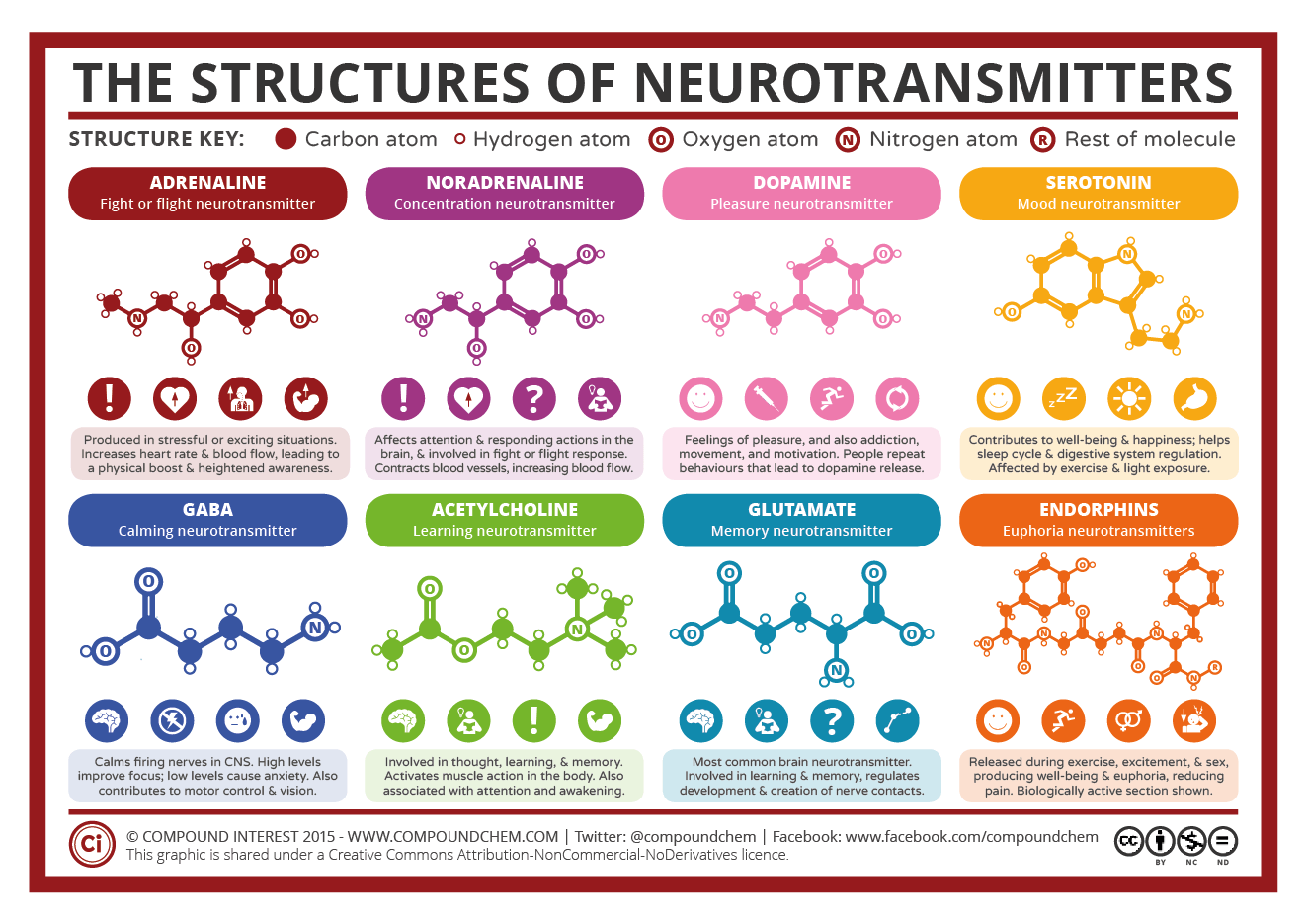 A Simple Guide to Neurotransmitters | Compound Interest