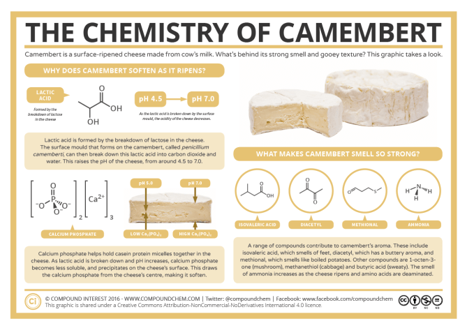 The Chemistry of a Camembert