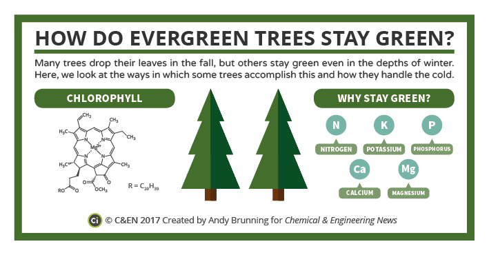 C&EN Evergreen Trees Preview