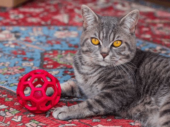 Cat Micturition Produces You Crazy