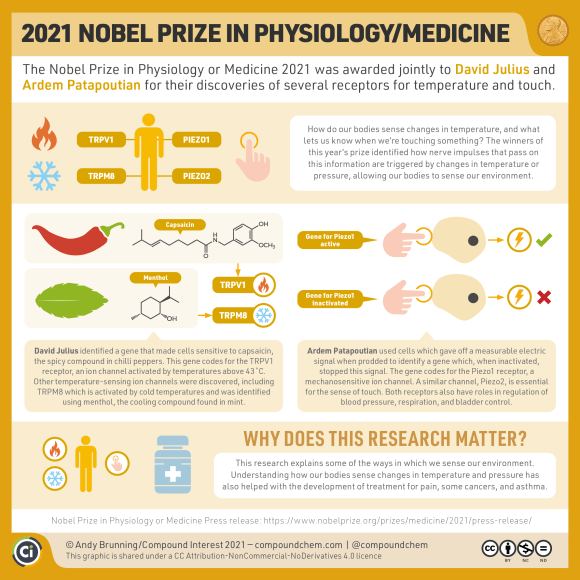 Infographic on the 2021 Nobel Prize in Physiology or Medicine, which was awarded for the discoveries of several receptors for temperature and touch. David Julius identified the TRPV1 receptor, which senses temperature, using capsaicin from chilli peppers. Further temperature sensing ion channels include TRPM8, activated by cold temperatures and identified using menthol, the cool compound in mint. Ardem Patapoutian discovered mechanosensitive receptors, Piezo1 and Piezo2, which are essential for the sense of touch, regulating blood pressure, respiration and bladder control. Understanding these receptors has led to the development of treatment for pain, some cancers, and asthma.