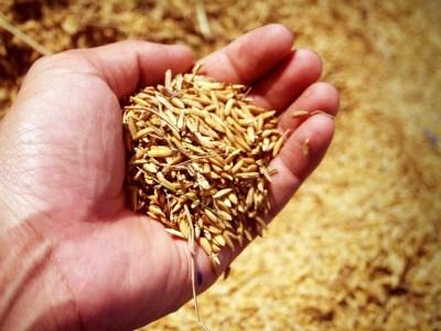 Fabricantes de productos de cáscara de arroz en China: nuestras 7 mejores opciones