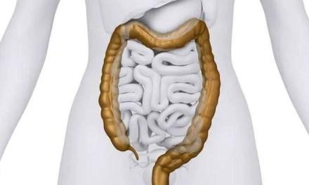 Descubren cómo una bacteria beneficiosa para la digestión coloniza el intestino