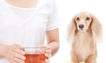 Estos son los 10 remedios naturales para tu perro
