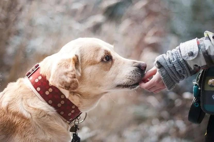 Probióticos naturales para perros