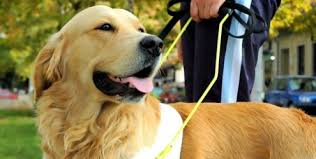 adestrar cachorro curso