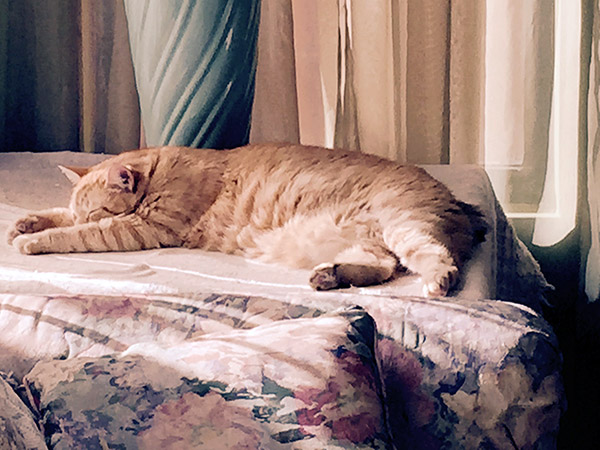 Tiger asleep on the table