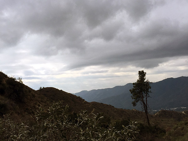 Cloudy grey skies above the mountain side. A lone tree in foreground.