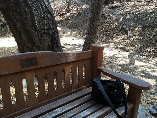 A wooden bench near an oak tree