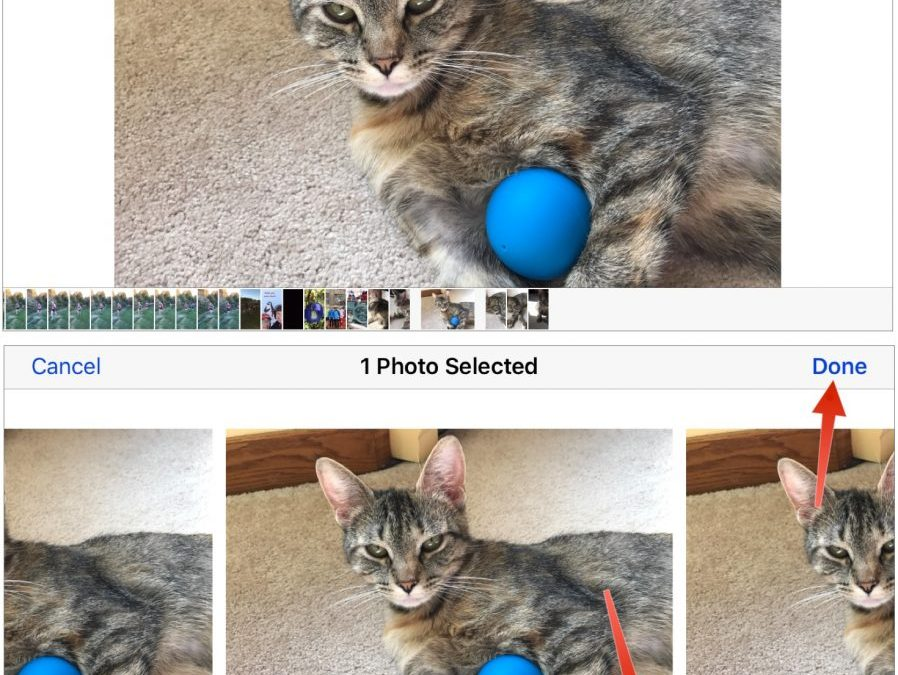Capture Perfect Photos of Kids, Pets, Sports, and Wildlife with the iPhone's Burst Mode