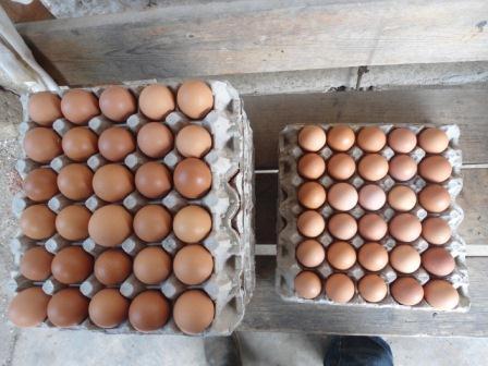 ¿Quién vino primero el huevo o la gallina?