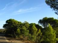 Veduta dal sentiero della pineta