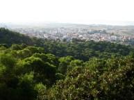 Veduta panoramica dalla pineta
