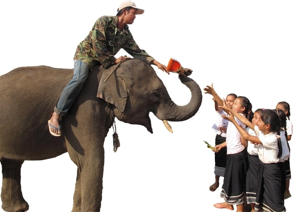 Mobile elephant libraries