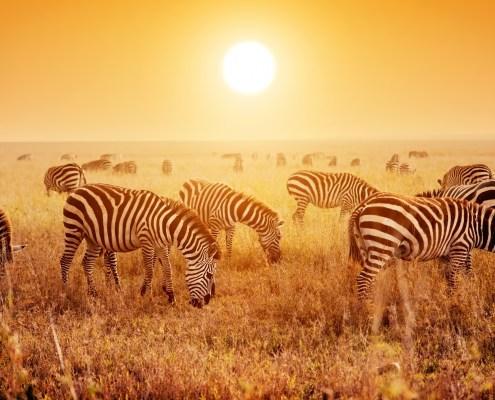 safari-kenia